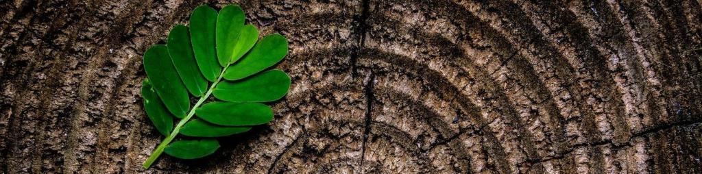Baumrinde mit Blatt